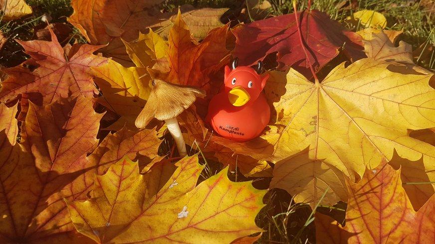 Kampfente auf Blättern in Herbststimmung